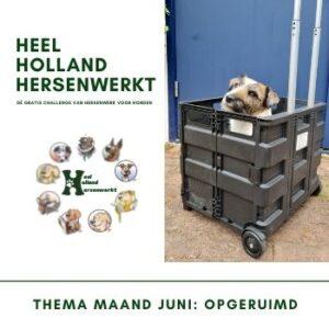 Heel Holland Hersenwerkt